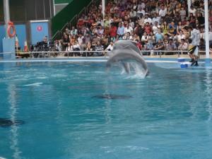 dolphin-lagoon-singapore-underwater-world