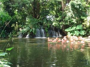 jurong-bird-park-singapore